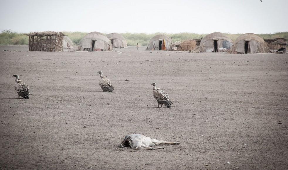 Vattenbristen skördar sina offer. Här i en by i närheten av Gewane där människorna helt livnär sig på boskap. Svälten är ett faktum.