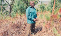 Trädplantering för mission
