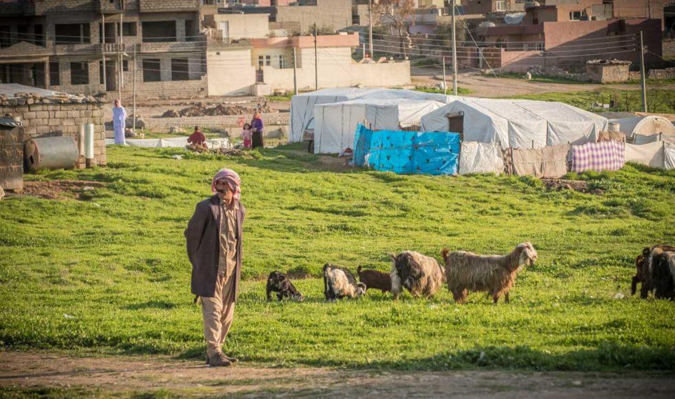 Många yazidier skapar små illegala bosättningar utanför flyktinglägren. Där kan de få lite mer levnadsutrymme, få chans att odla och ta hand om sina djur.